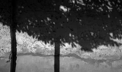 Photo en noir et blanc de l'ombre d'un arbre sur un mur