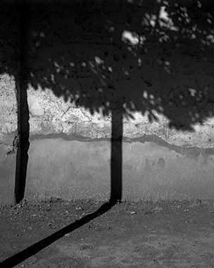 Photo en noir et blanc d'une ombre d'arbre sur le mur